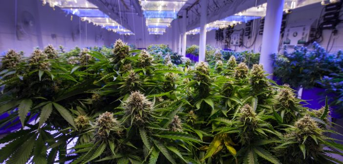 Governor Cuomo and Legislative Leaders Announce Agreement to Legalize Adult-Use Cannabis